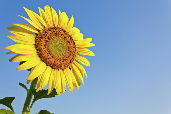 7 easy tips for a healthy life. Simple things will make you bloom.